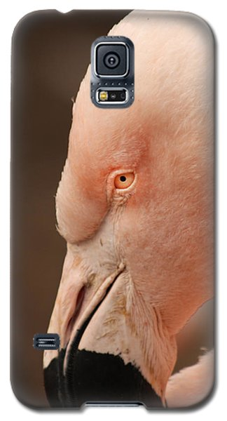 Galaxy S5 Case featuring the photograph Pink Flamingo by Bob and Jan Shriner