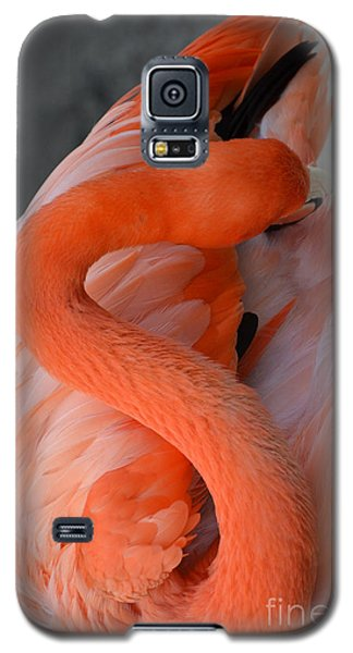 Pink Flamingo Galaxy S5 Case by Robert Meanor
