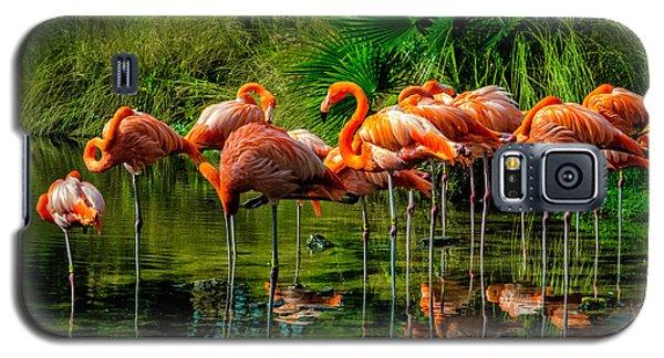 Pink Flamingos Galaxy S5 Case