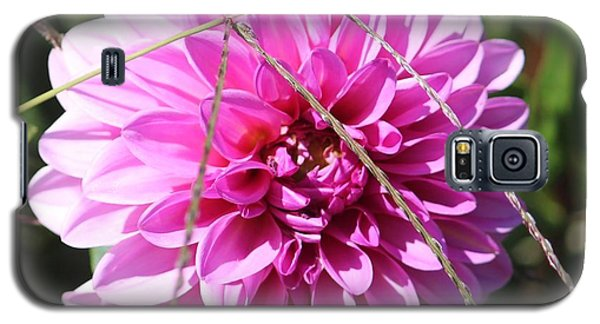 Galaxy S5 Case featuring the photograph Pink Flower by Cynthia Snyder