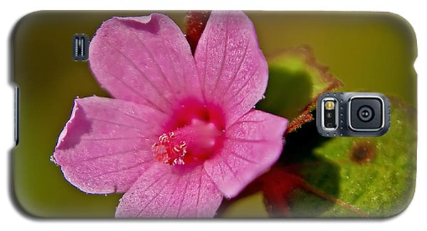 Galaxy S5 Case featuring the photograph Pink Flower by Olga Hamilton
