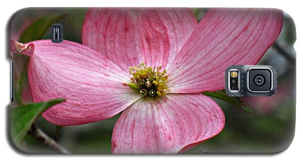 Galaxy S5 Case featuring the photograph Pink Flowering Dogwood by William Tanneberger