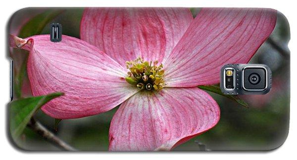 Pink Flowering Dogwood Galaxy S5 Case