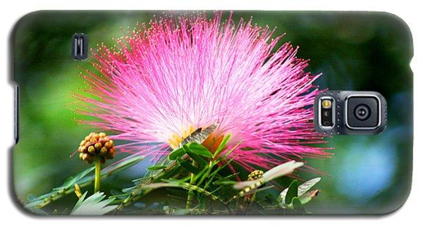 Pink Fluff Galaxy S5 Case