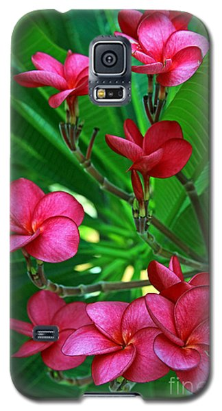 Galaxy S5 Case featuring the photograph Pink Frangiapani - Plumeria by Larry Nieland