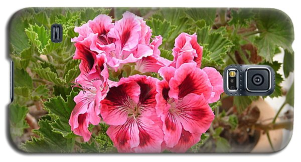 Galaxy S5 Case featuring the photograph Pink Geraniums by Lew Davis