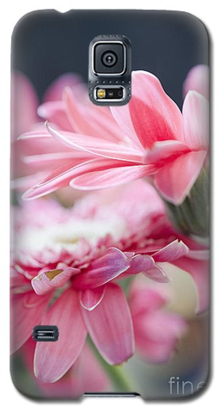 Pink Gerber Daisy - Awakening Galaxy S5 Case