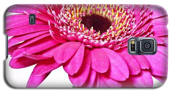 Pink Gerber Daisy Flower Galaxy S5 Case