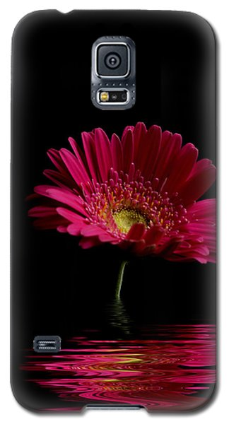 Pink Gerbera Flood 1 Galaxy S5 Case