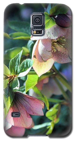 Pink Hellebore Galaxy S5 Case by Gerry Bates