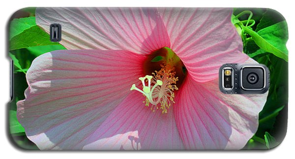 Pink Hibiscus Galaxy S5 Case by Luther Fine Art