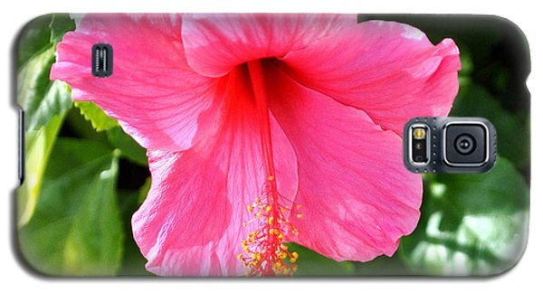 Pink Hibiscus With Large Stamen Galaxy S5 Case by Jay Milo
