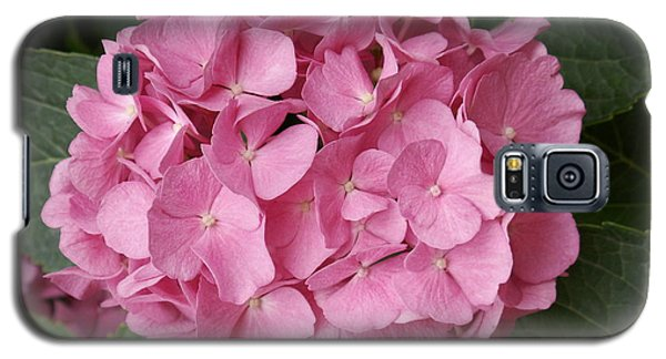 Galaxy S5 Case featuring the photograph Pink Hydrangea by Sandy Molinaro