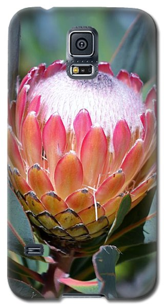 Pink Ice Protea Galaxy S5 Case