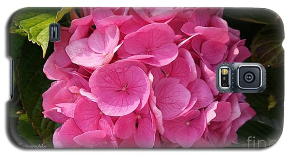 Galaxy S5 Case featuring the photograph Blushing Rose by Jeannie Rhode