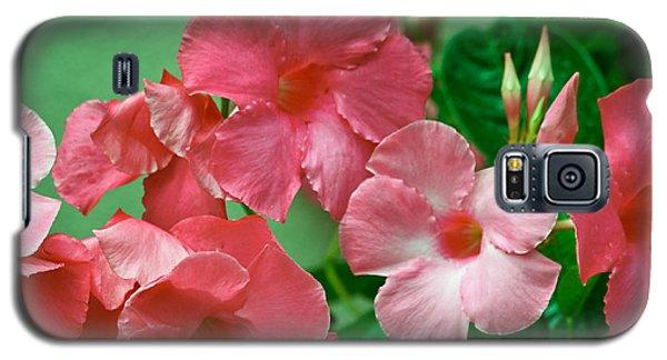 Pink Mandevilla Vine Galaxy S5 Case
