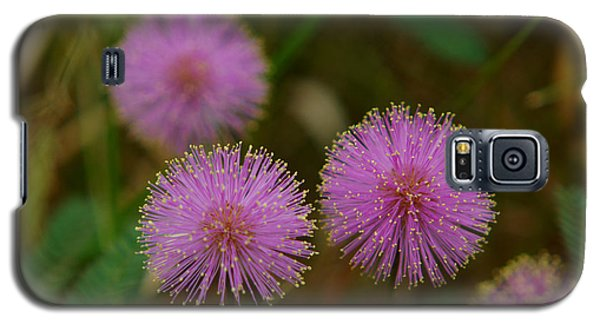 Pink Mimosa Galaxy S5 Case by Kim Pate