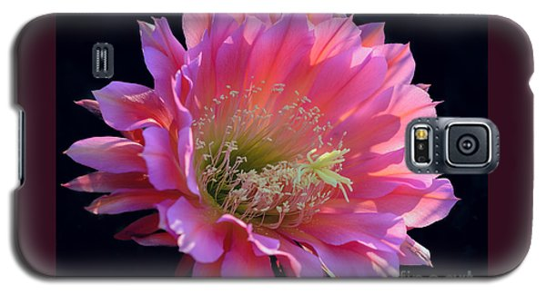 Pink Night Blooming Cactus Flower Galaxy S5 Case by Tamara Becker