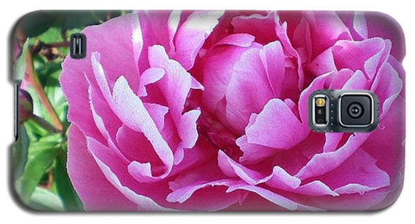 Pink Peony Galaxy S5 Case by Barbara Griffin