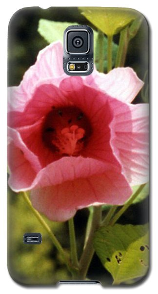 Hibiscus Pink Perfection Galaxy S5 Case