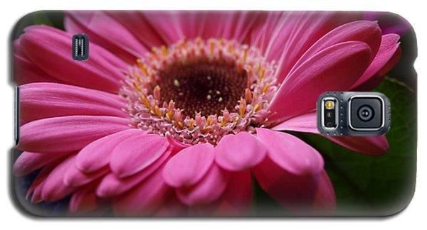 Pink Petal Explosion Galaxy S5 Case