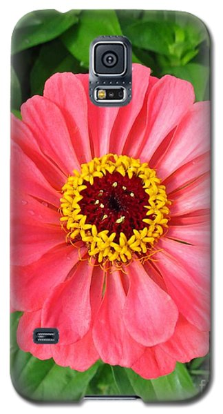 Pink Petals 2 Galaxy S5 Case