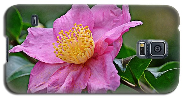 Galaxy S5 Case featuring the photograph Pink Petals by Linda Brown