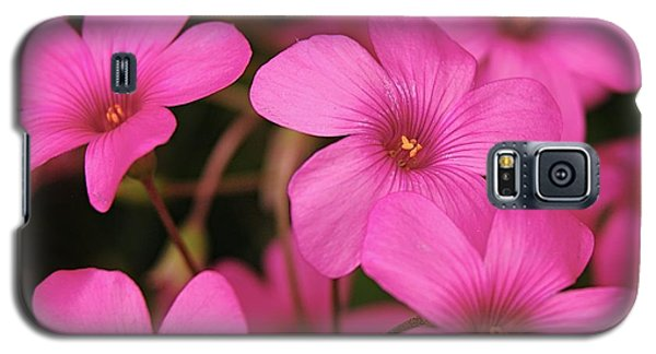 Pink Phlox Galaxy S5 Case