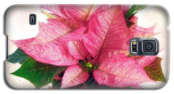 Pink Poinsettia Galaxy S5 Case by Louise Kumpf