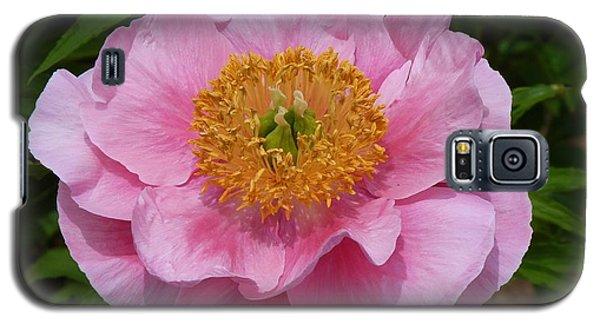 Pink Poppy Galaxy S5 Case by Jeanette Oberholtzer