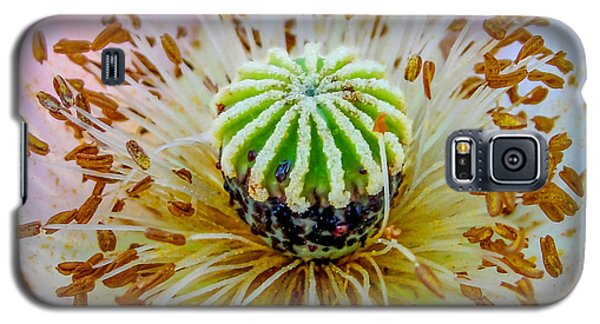 Galaxy S5 Case featuring the photograph Pink Poppy Squared by TK Goforth