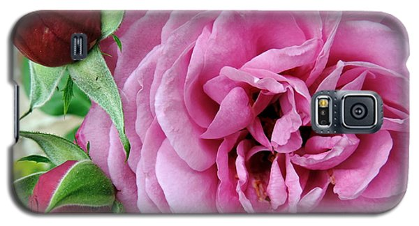 Pink Rose And Buds Galaxy S5 Case