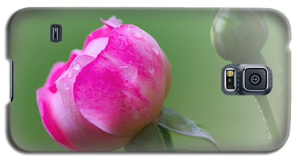 Pink Rose And Raindrops Galaxy S5 Case