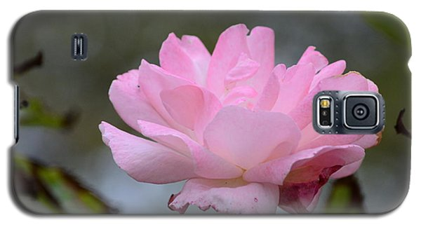 Galaxy S5 Case featuring the photograph The Last Rose by Debra Martz