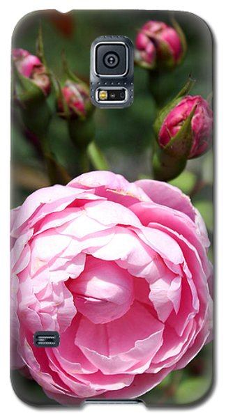 Galaxy S5 Case featuring the photograph Pink Rose by Ellen Tully