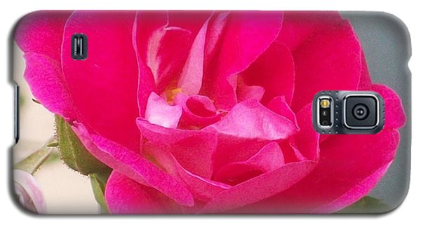 Pink Rose Galaxy S5 Case by Jewel Hengen