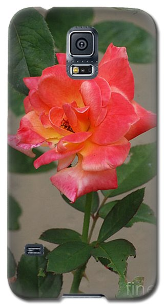 Galaxy S5 Case featuring the photograph Pink Rose by Mark McReynolds