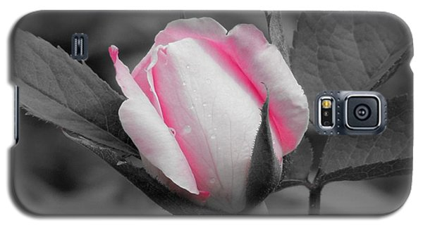Pink Rose On Black And White Galaxy S5 Case