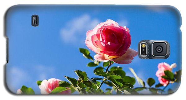 Pink Roses - Featured 3 Galaxy S5 Case by Alexander Senin