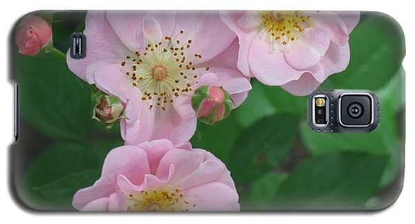 Galaxy S5 Case featuring the photograph Pink Roses by HEVi FineArt