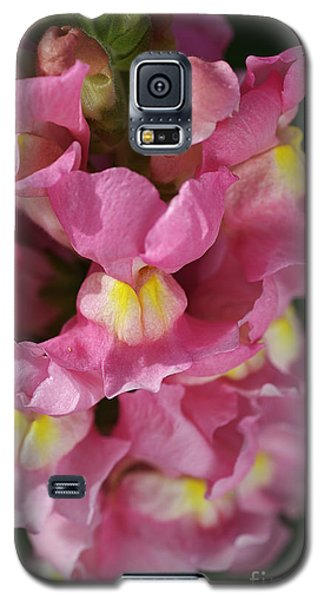 Pink Snapdragon Flowers Galaxy S5 Case