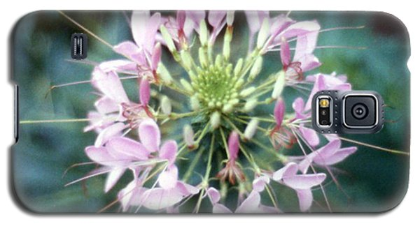 Pink Cleome' Galaxy S5 Case