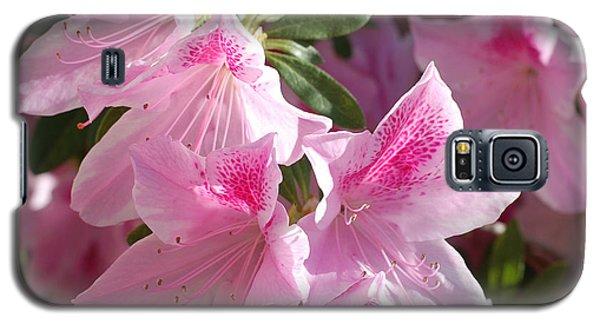 Pink Star Azaleas In Full Bloom Galaxy S5 Case