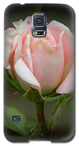 Pink Tea Rose Galaxy S5 Case