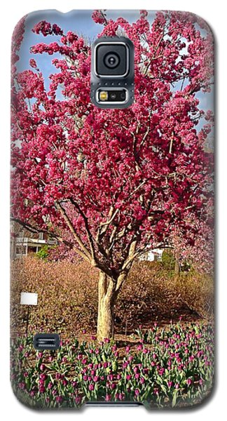 Pink Tree Galaxy S5 Case