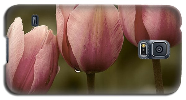 Pink Trio Galaxy S5 Case by Sonya Lang