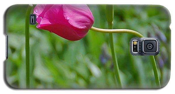 Galaxy S5 Case featuring the photograph Pink Tulip by Aimee L Maher Photography and Art Visit ALMGallerydotcom