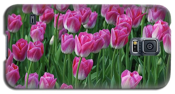 Galaxy S5 Case featuring the photograph Pink Tulips 2 by Allen Beatty
