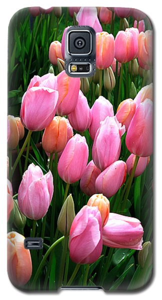 Galaxy S5 Case featuring the photograph Pink Tulips by Haleh Mahbod