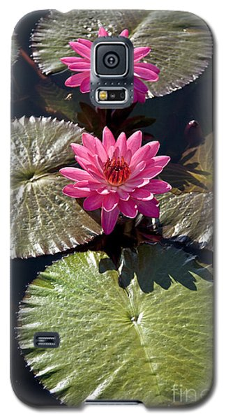 Pink Water Lily IIi Galaxy S5 Case